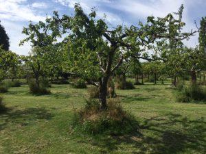 showtuin Schouten Bomen en Loonbedrijf