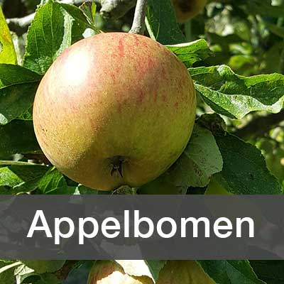 Appelbomen assortiment bij Schouten Bomen