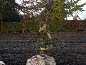 Diverse rooi- en plantwerkzaamheden in Midwoud