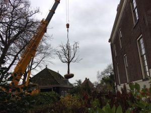 appelboom planten met telekraan
