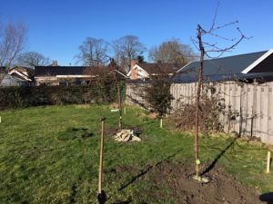 planten fruitbomen sint pancras