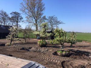 planten fruitbomen boomgaard moderne tuin